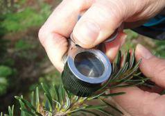 Identification using a hand lens. (Photo by Chal Landgren, OSU.)