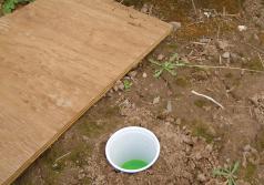 Setting a pitfall trap