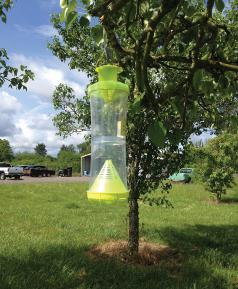 Yellowjacket attractant trap. (Photo courtesy of Oregon Department of Agriculture.)